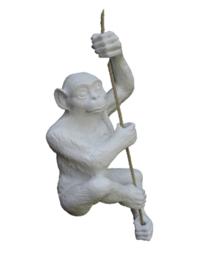 Hanging Monkey white