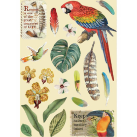 KLSP095 Stamperia Wooden Shapes A5 Amazonia Parrot