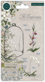 CCSTMP020 Craft Consortium The Emporium Botany Clear Stamps
