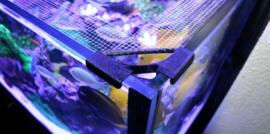 Bananaquarium Fishguard
