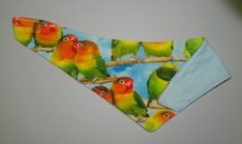 Papegaaien zeversjaaltje