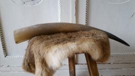Koehoorn 48-50 cm