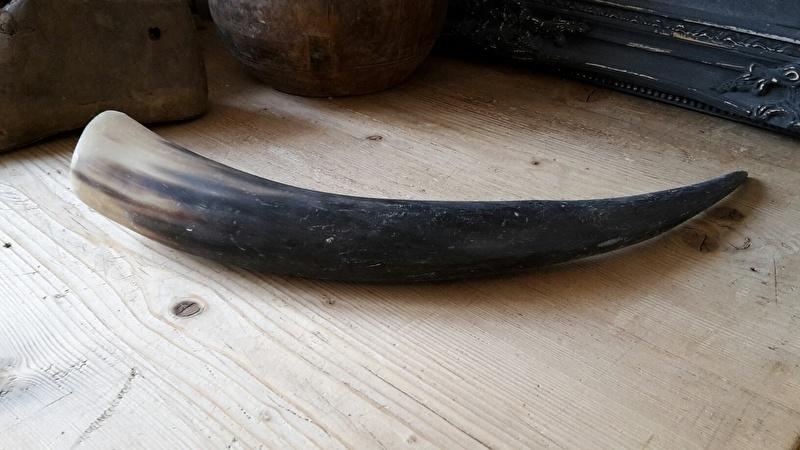 Koehoorn 45-48 cm
