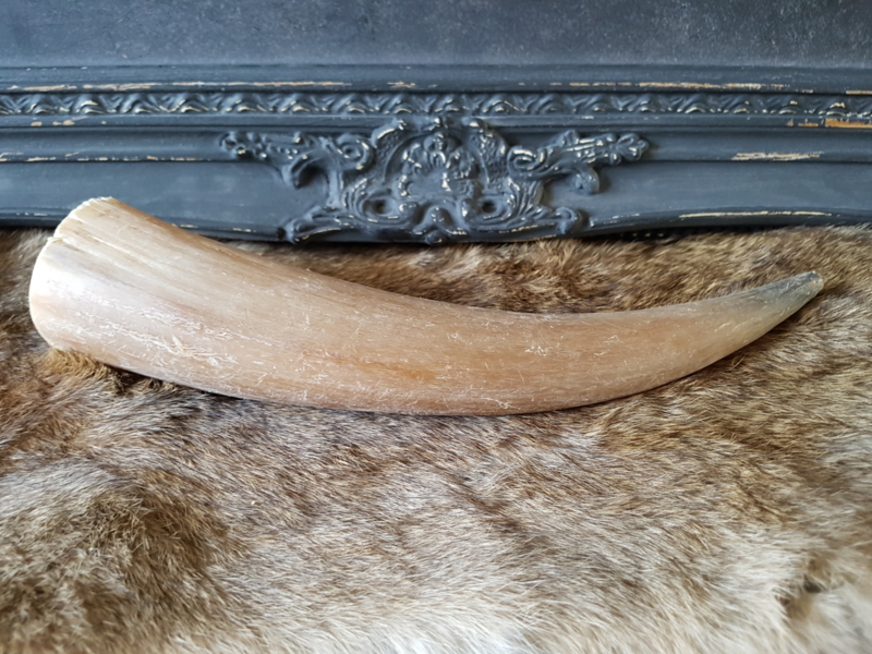 Koehoorn 30 cm