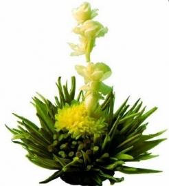 Theebloem - Tea Flower Sunny Day