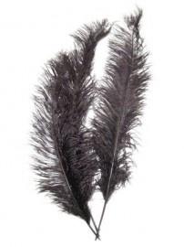 Pieten veren zwart groot