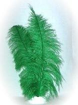 Pieten veren groen groot
