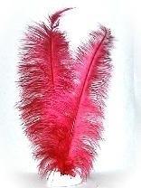 Pieten veren rood groot