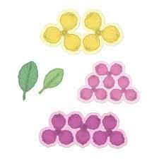 sweet magnolia blooms die