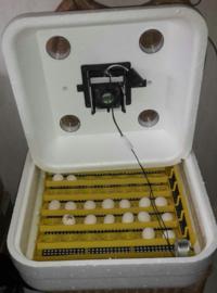 Budget broedmachine - Bator Iso 25