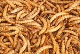 Meelwormen 0,50 liter