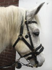 Karamba (pony)