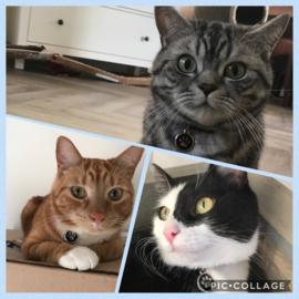 Zaro, Enzo en Jacks