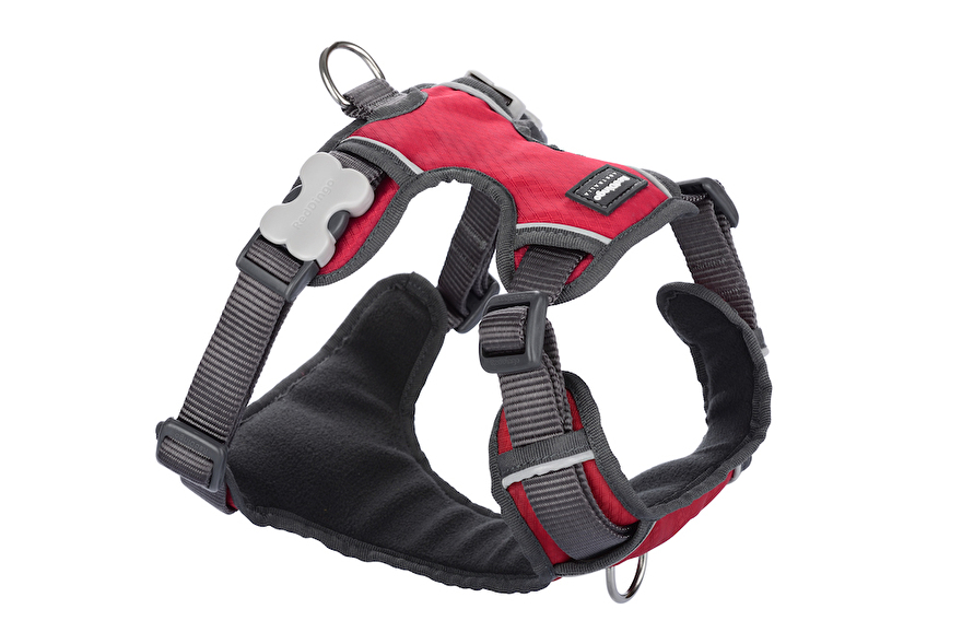 Padded Harness Red 20mm.jpg