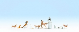 Noch 15715 # Honden en Katten
