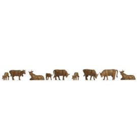 Noch 38216#Koeien Bruin N