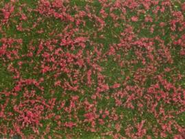 Noch 07257#Weide rood