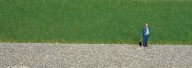 Noch 07073 # Master-grasmengsel koeienweide