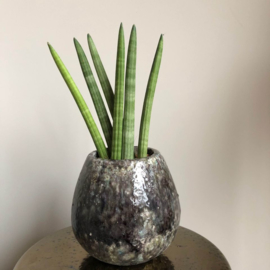 PTMD pot met plant
