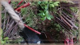 Krans Mos Berk Buxus   30 cm