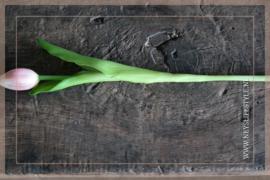 Tulp in knop kunst 36 cm | roze