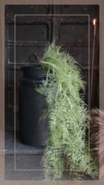 Asparagus kunt tak groen   105 cm