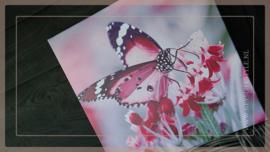 Canvas doek outdoor   Vlinder