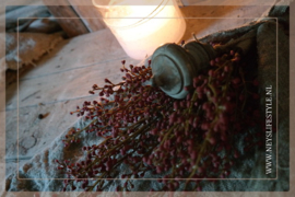 Bosje skimmia rood | S