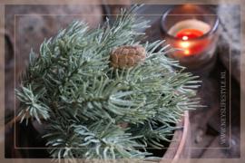 Pine Bush   27cm