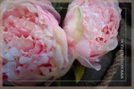 Bosje Pioenrozen | roze