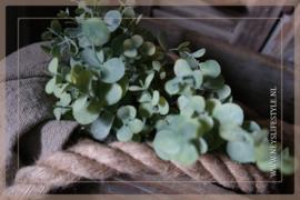 Eucalyptus bosje | 33 cm