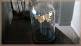 Stolp vlinder | rond