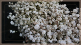 Gipskruid krans ingedroogd 25 cm