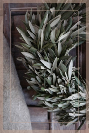 Krans Olijfblad | 30 cm