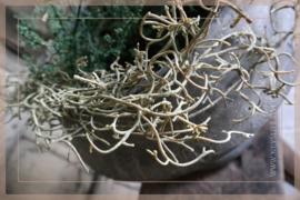 Tillandsia guirlande  | 90 cm
