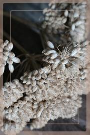 Droogbloem Ferrule  3 stuks | 25 - 40 cm