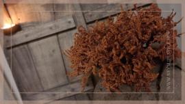Limonium Bush   oranje