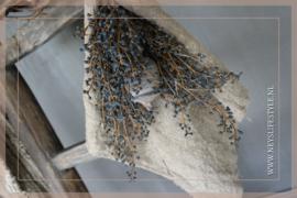 Bosje skimmia blauw | M