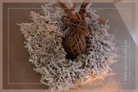 Asparagus krans snow | 50-60 cm