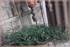 Asparagus bos gepreserveerd | dark green