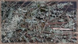 Krans Larix moss wild   30 cm