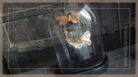Stolp vlinder | ovaal