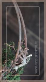 Hanger deco ring mos bonsai