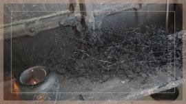 Asparagus bos gepreserveerd   black