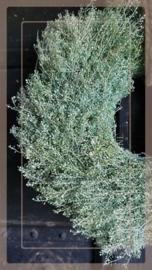 Krans lepidium gedroogd 45 cm | groen