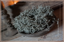 Wax krans Asparagus olive 23 cm