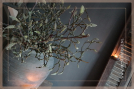 Magnolia takken vers per 3