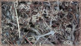 Krans Bonsai mos 60 cm | naturel