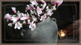 Magnolia tak | roze 40 cm