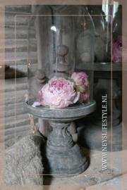 Gevriesdroogde pioenroos | roze L